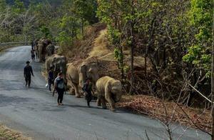 """泰国游客数量锐减""""失业""""大象打道回府"""