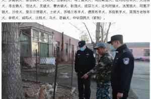 哈尔滨城区内禁养39种烈犬,苏牧、中华田园犬在列