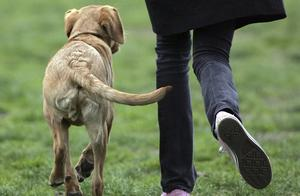 想要读懂狗狗的肢体语言,要从简单的摇尾巴开始,狗狗摇尾的意义