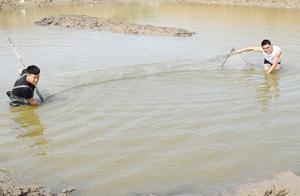 水坑布满了粘网,农村小伙用窗纱坑内赶鱼,粘网上竟然直接爆网了