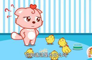 猫小帅:主人喂小鸡吃饭,小鸡们却不吃,你知道这是为什么吗