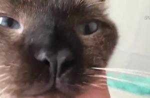 女子养了一只暹罗猫,养了半年后发现不对劲,看到猫咪眼睛后吓傻