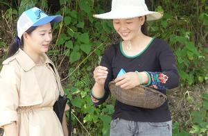 妯娌俩去村口的桑树上摘桑枣,看这画面有没有勾起你的童年回忆?