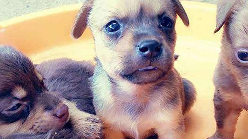 两个月大的小狗可以吃些什么食物
