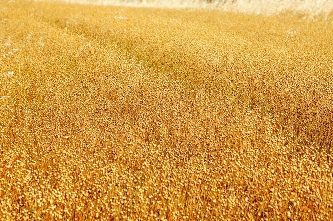 什么是五谷杂粮,有哪几种,中国历史上的五谷到底指的是哪五种