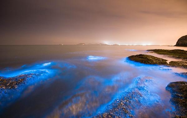 利用硅藻发光的生物荧光灯,将静谧的蓝色随身携带