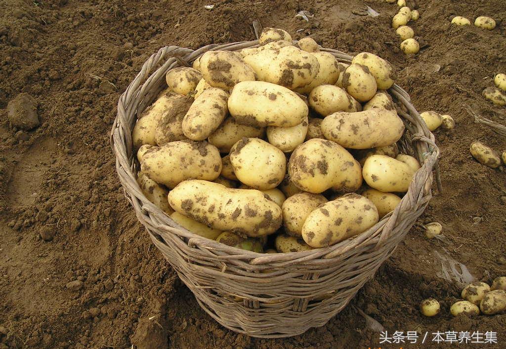 发芽的土豆,到底还能吃吗?