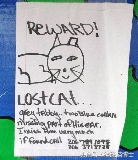 国外的手绘寻猫启事,这画风是压根没打算把猫找回来吧……
