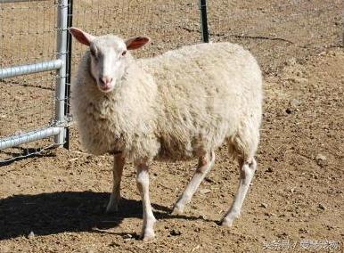 67,79年的生肖羊,恭喜你!