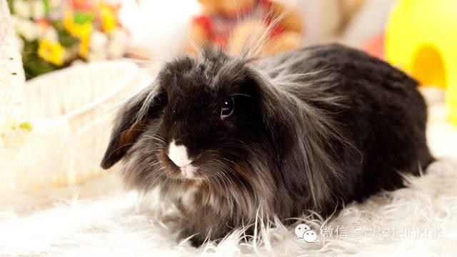 養兔子都必須知道的10件事!
