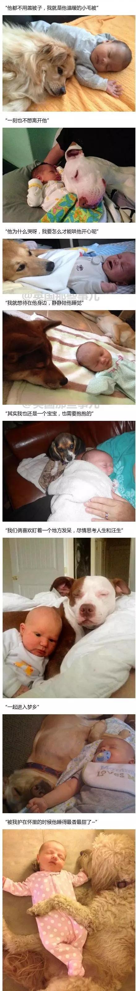 当狗狗第一次见到小baby时