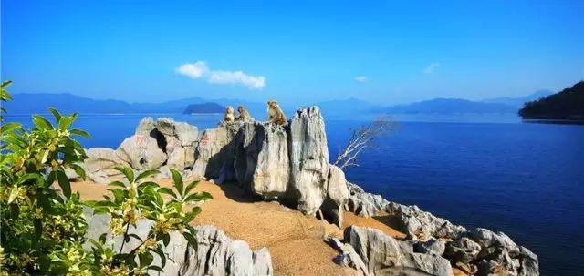 千岛湖人少景美的赏桂好去处,99%的人想不到!