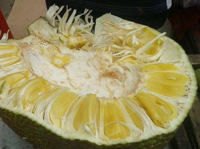 菠萝蜜怎么切(菠萝蜜的正确剥法图片)