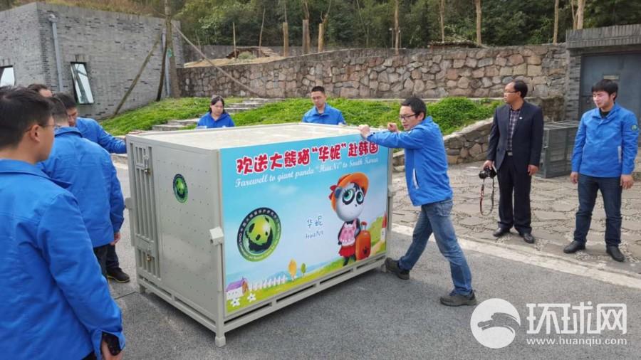 中国大熊猫22年后重返韩国 爱宝乐园成熊猫新家