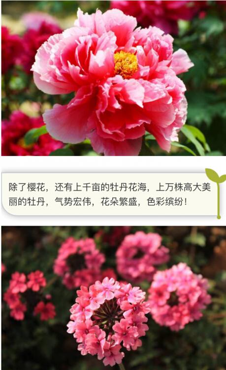 重庆一景区涉嫌过度炒作