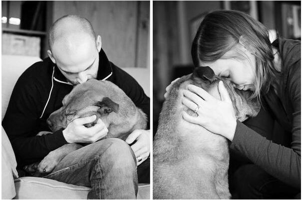 10个理由讲出,狗狗永远是人类最好的朋友!