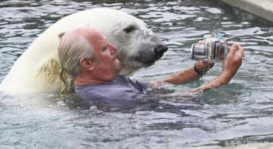 男子收养北极熊,小时候很萌一年后被这体型吓坏了!