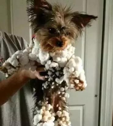 你家的狗子第一次见到雪是什么反应?下面这些已经放飞自我了