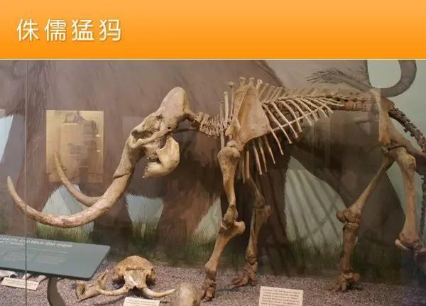 猛犸象的种类资料及图片10