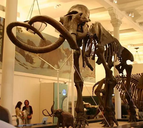 猛犸象的种类资料及图片16