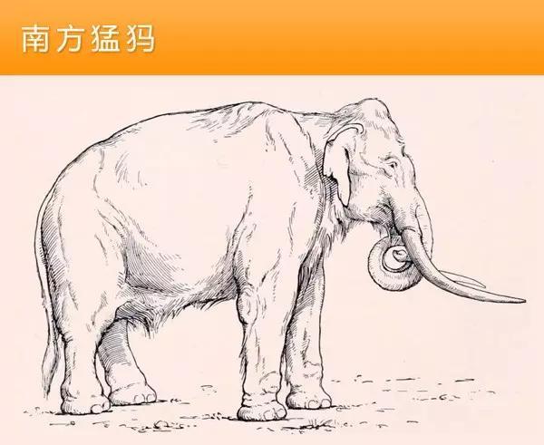 猛犸象的种类资料及图片20