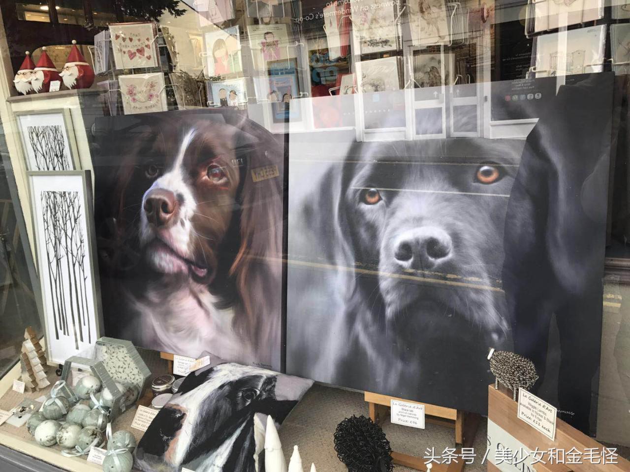 狗狗的天堂:法国巴黎,阿尔卑斯山下的爱狗情结