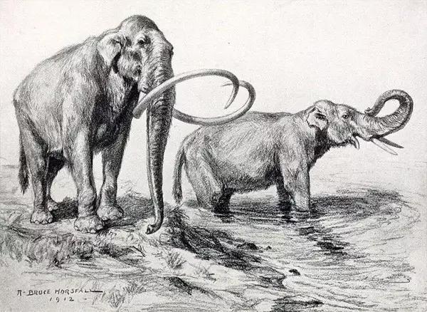 猛犸象的种类资料及图片15