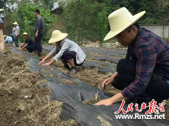 """云南凤庆:党员志愿服务队""""开进""""贫困农户田间地头"""