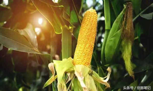 這是全球最廣泛流通的14種轉基因食品,其中歐盟禁售轉基因蔬菜