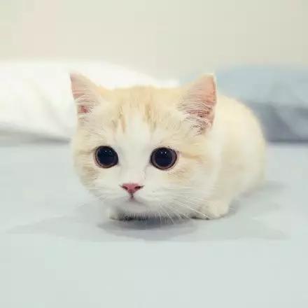一大波小奶猫来袭,瞬间被治愈了!