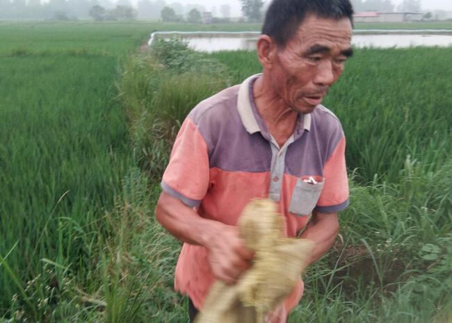 河南66岁老农跳水连救4人:情愿拿自己的命去换孩子的命