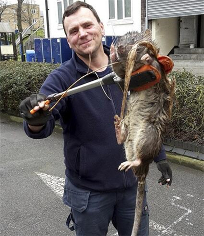 英国爆发2亿老鼠 婴儿被巨鼠咬伤