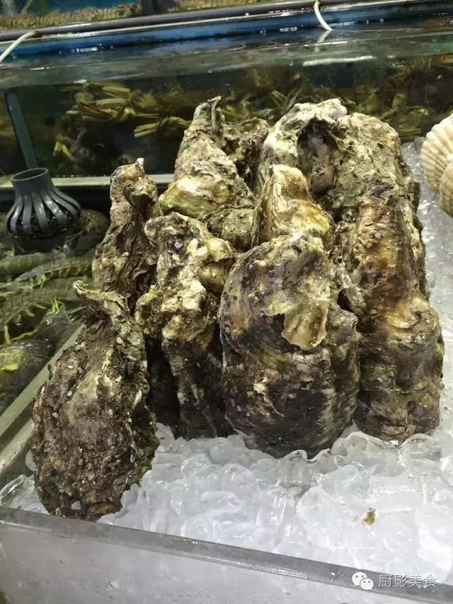 香港西贡海鲜市场,珍稀野生鱼类宝典! 食材宝典 第55张