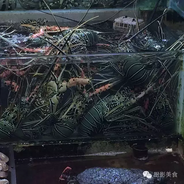 香港西贡海鲜市场,珍稀野生鱼类宝典! 食材宝典 第62张