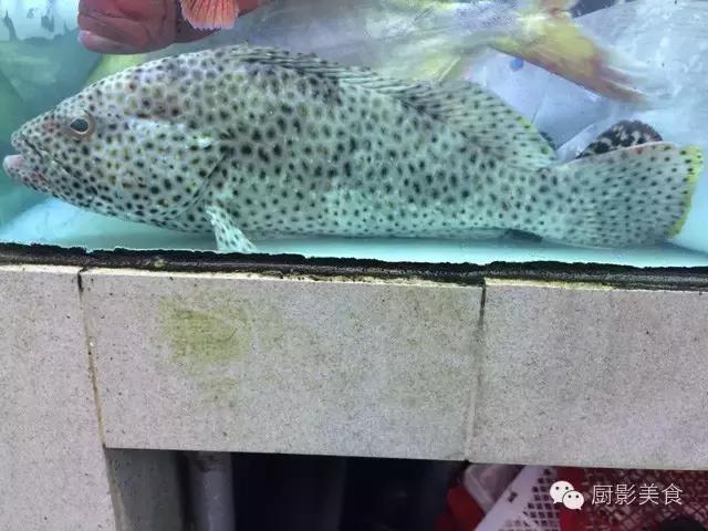 香港西贡海鲜市场,珍稀野生鱼类宝典! 食材宝典 第23张