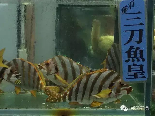 香港西贡海鲜市场,珍稀野生鱼类宝典! 食材宝典 第16张