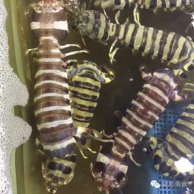 香港西贡海鲜市场,珍稀野生鱼类宝典! 食材宝典 第35张