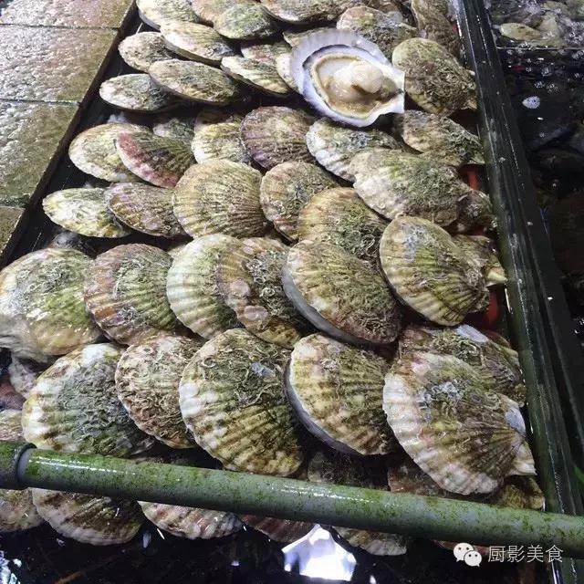 香港西贡海鲜市场,珍稀野生鱼类宝典! 食材宝典 第38张