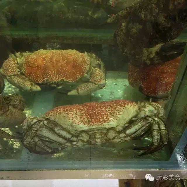 香港西贡海鲜市场,珍稀野生鱼类宝典! 食材宝典 第69张