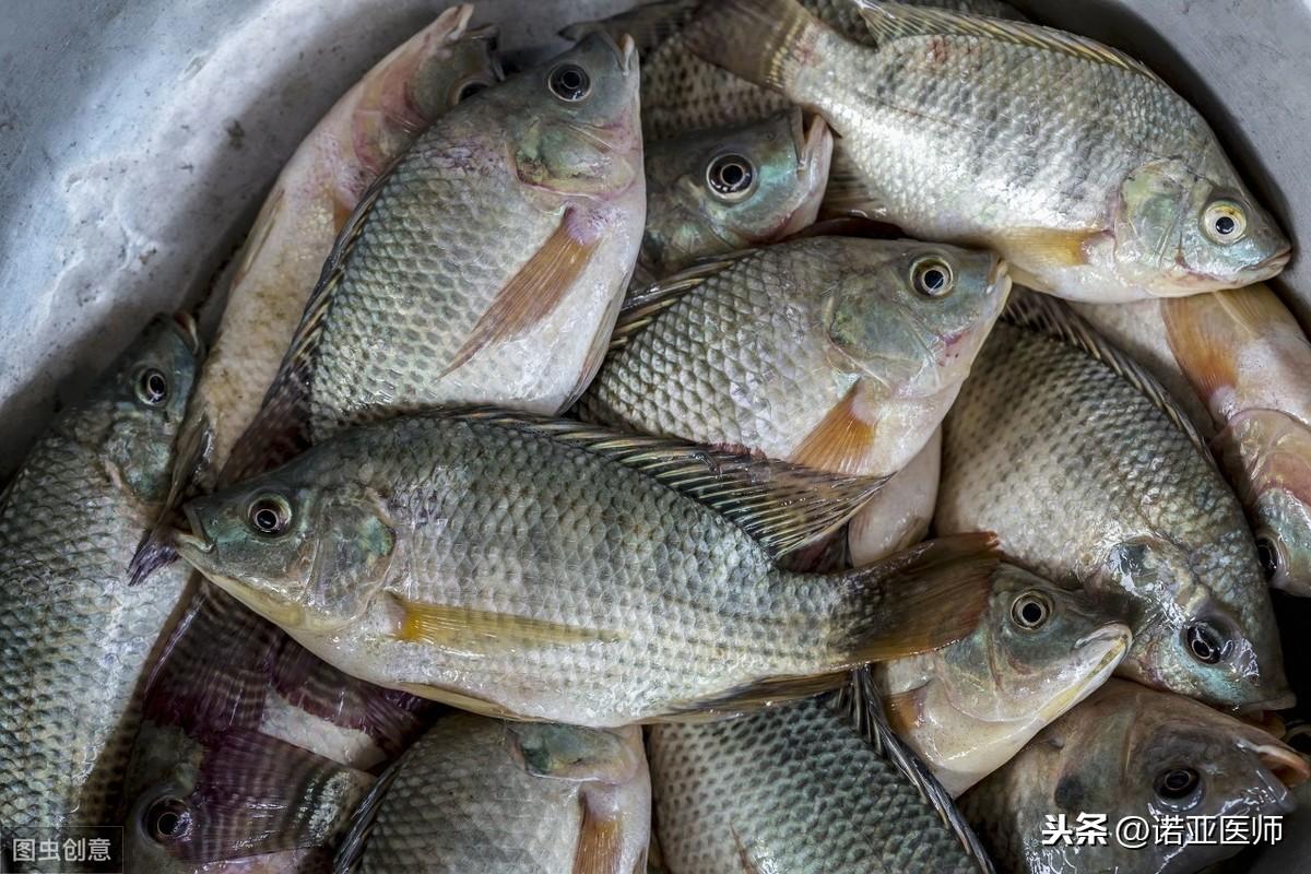 为什么要少吃罗非鱼