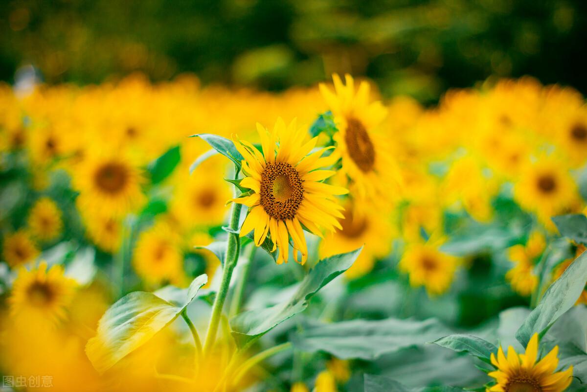 落叶寻的是归根,无论随风飘了多远