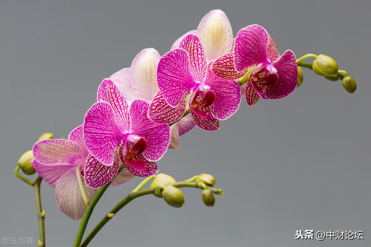 散文:清风兰草,夏日静