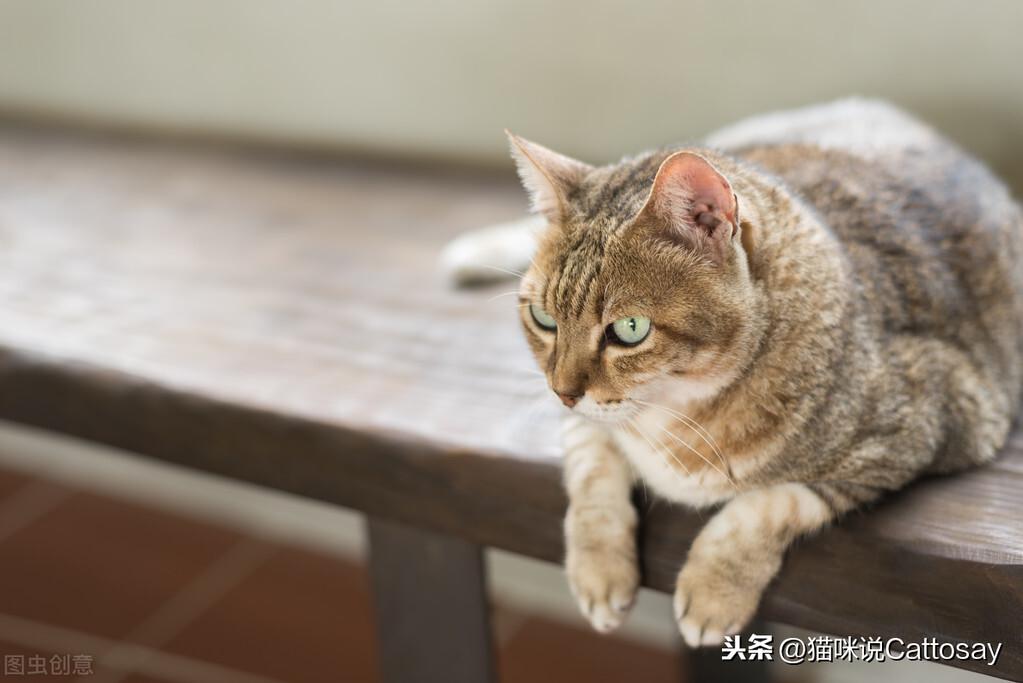 铲屎官对猫好,猫能记住你的心意,猫也会有应对谋略