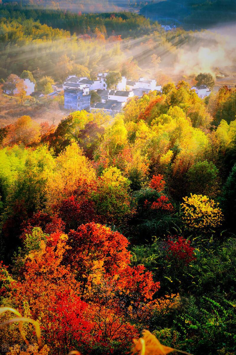 枫染秋色醉婺源,南方最美赏秋地来了