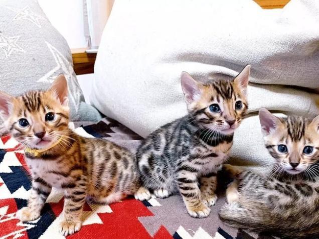 """日本的网红""""小奶猫"""",治愈了所有不开心"""