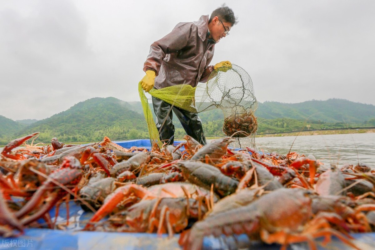 如果你有一份稳定的工作,一个月工资2万多,你还会养小龙虾吗?