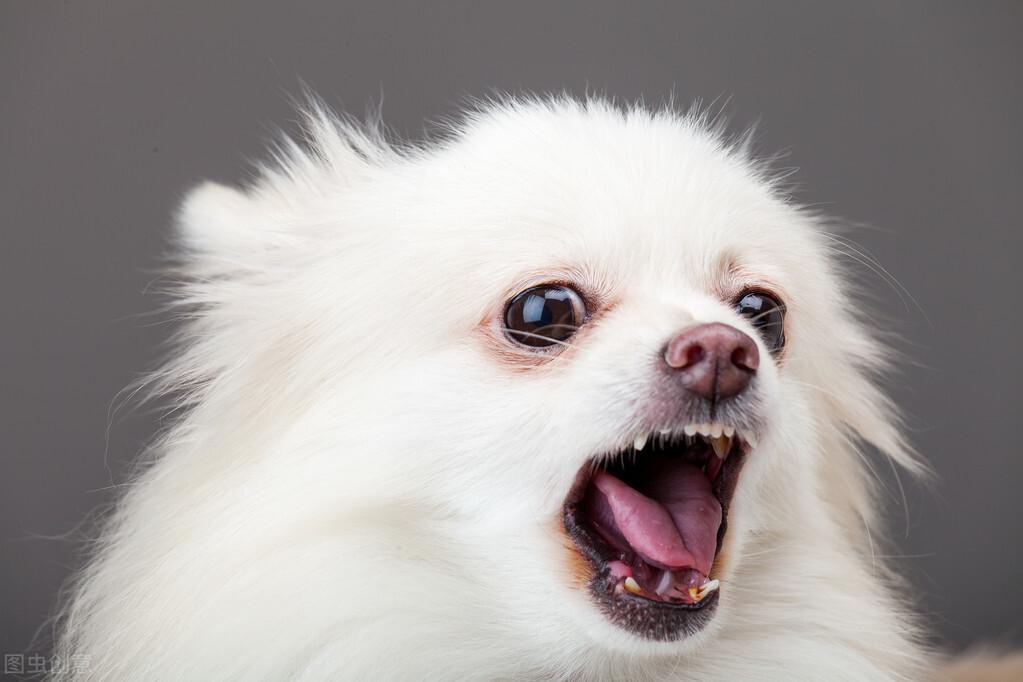 十大最美丽的品种狗,你的孩子在里面吗?