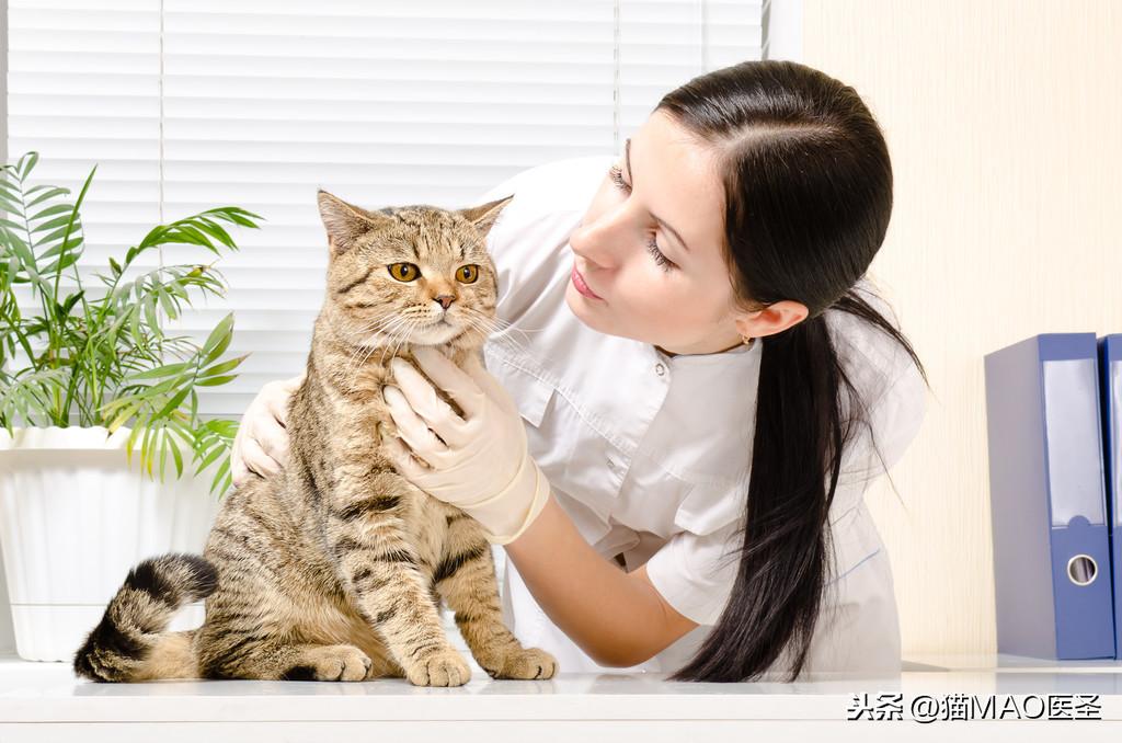 貓狗尿結石的治療和護理建議(非專業慎點,耗時N天總結上萬字)