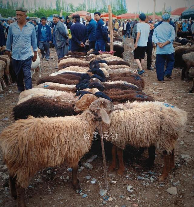 在喀什发现一个特别的市场,新疆旅行大开眼界的地方:牛羊大巴扎