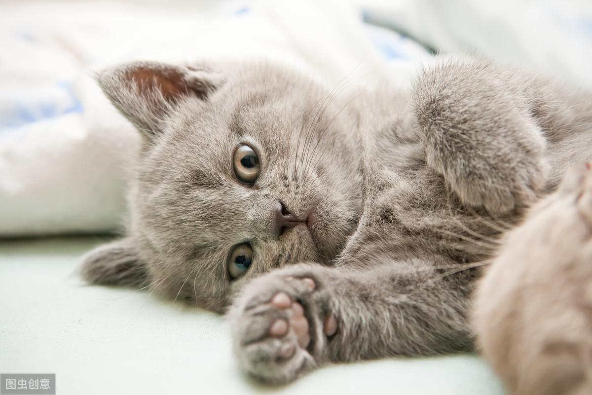 辟谣:猫咪要吃化毛膏,对猫的身体有好处,真是这样吗?